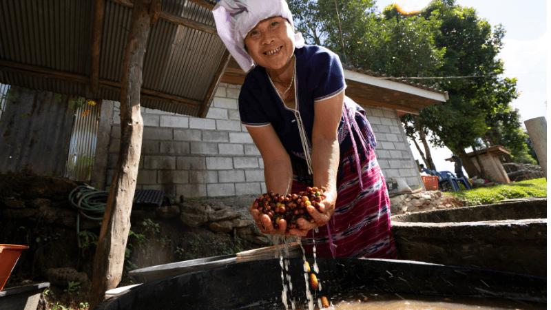 Global Gifts Coffee and Seedlings