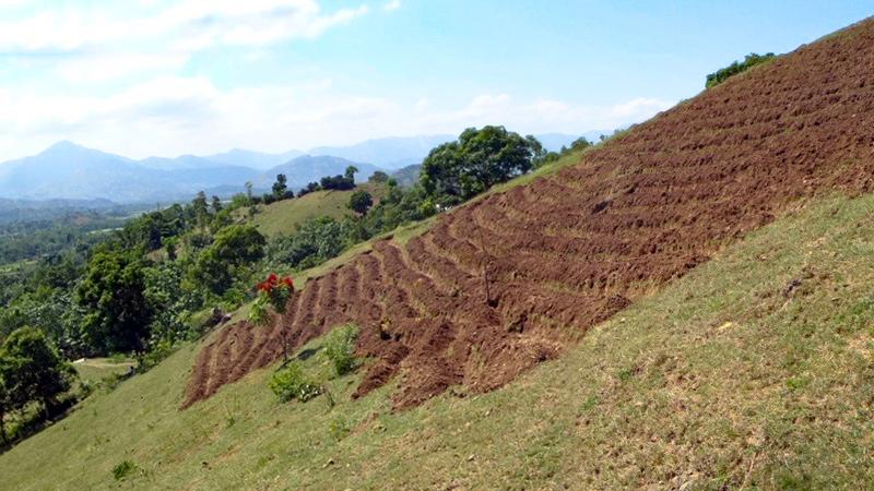 Haiti - Agricultural Development